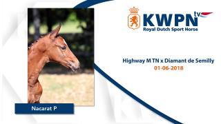 04 Nacarat P (Highway M TN x Diamant de Semilly)