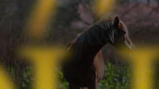 Horse = Love