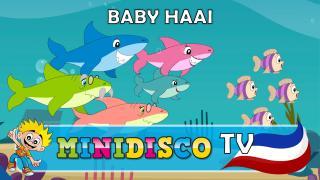 Baby Haai