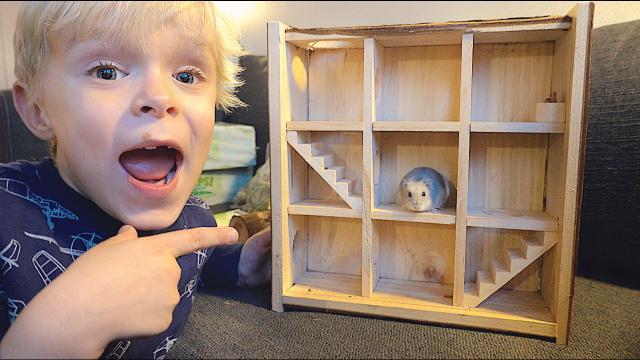 HAMSTER DOOLHOF VOOR SAMMiE!  | Bellinga Vlog #1544