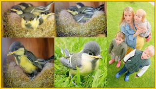 BABYVOGELTJES UiT ZiEN VLiEGEN iN ONZE TUiN  ( vogelnestjes ontdekt) | Bellinga Vlog #2112