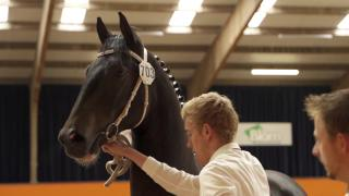 Aftermovie Tuigpaard Hengstenkeuring