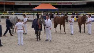 Nationale merriekeuring - finale springmerries