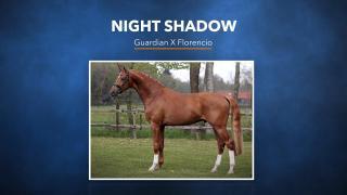 33. Night Shadow