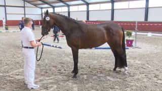 Stamboekkeuring Kootwijkerbroek - Dressuur (143, 151)