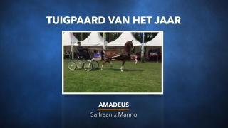 Uitreiking KWPN Tuigpaard van het jaar - Amadeus