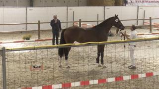 Stamboekkeuring Appingedam - Springen (10, 16, 23)
