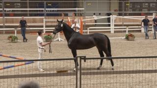 Ermelo springen - Groep 7 (283-284-285-286)