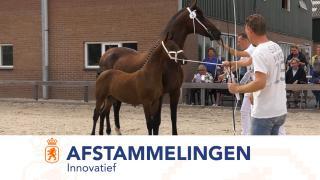 Afstammelingenkeuring Tuigpaarden Innovatief