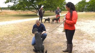 Huisdieren TV | 3.5 | Hondenwandeling met Nicole van de DoggyDating-app