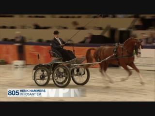 Presentatie Gelderse Hengst Goedgekeurd 2016