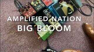 Talking Shop  |  Episode 4  |  Amplified Nation's 'Big Bloom'