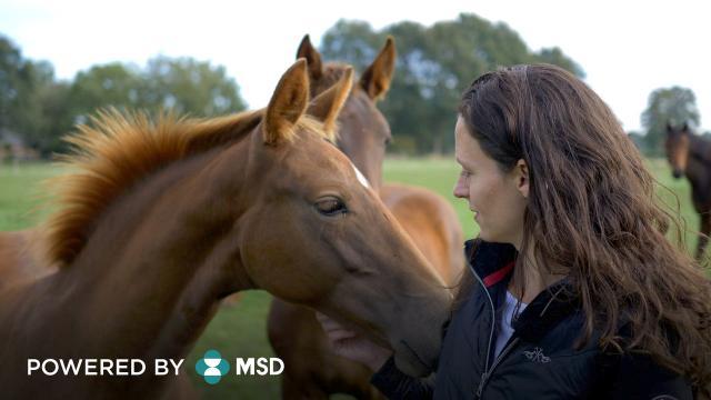 Bescherm je paard optimaal tegen Droes