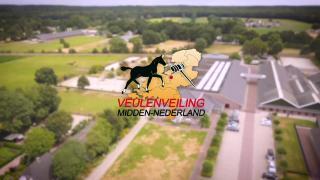 Commercial Veulenveiling Midden-Nederland