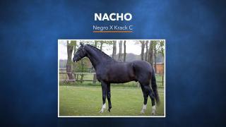 41. Nacho