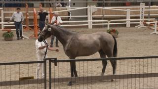 Ermelo springen - Groep 5 (280-281-282-316-287)