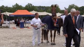 4 t/m 7 jarige merries - Gelders paard