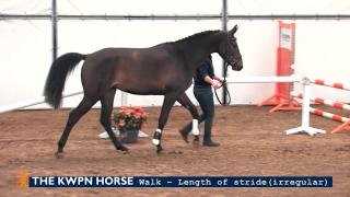 Walk - length of stride