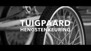 Hengstenkeuring tuigpaard - promo