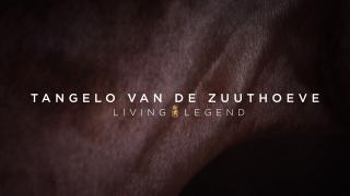 Living Legend - Tangelo van de Zuuthoeve