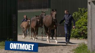 KWPN Ontmoet - Stoeterij Beltmanshoeve