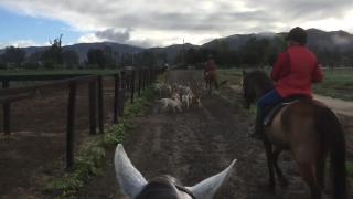Where real horsemanship can take us