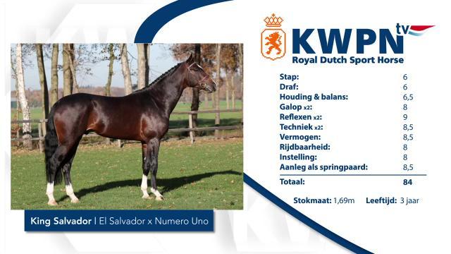 6. King Salvador