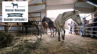 Horse Rescue Heroes Season 1 Episode 7
