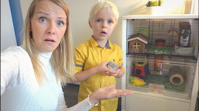 HEEFT HAMSTER SAMMiE EEN TE KLEiNE KOOi?  | Bellinga Vlog #1484