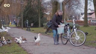 Trailer tv serie Typisch Harderwijk