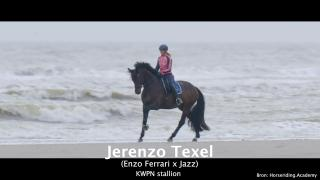 Jerenzo Texel
