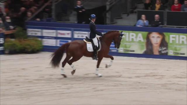 Show Finalisten HC Gelders paard