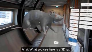 Avatar Zoo - teaching animal anatomy using virtual reality