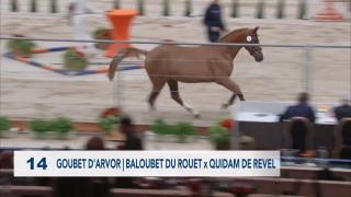 14. GOUBET D'ARVOR