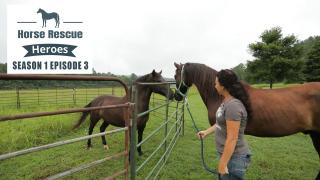 Horse Rescue Heroes S1 Episode 3