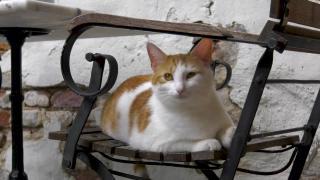 Huisdieren TV | 4.5 | Op bezoek bij het kattencafé in Nijmegen