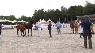 Nationale veulenkeuring - Finale Gelders Paard
