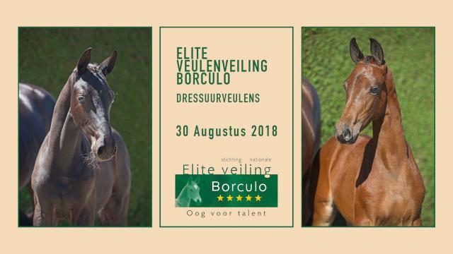 Elite Veulenveiling Borculo - Dressuurveulens