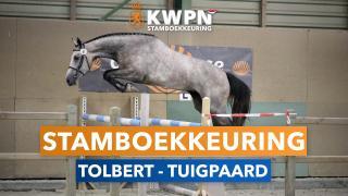 Stamboekkeuring Tolbert - Tuigpaard