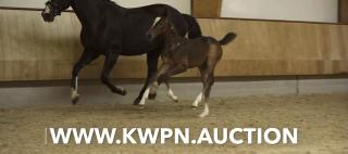 Place your bid - KWPN Online Auction