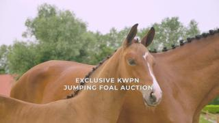 Exclusive KWPN Jumping Foal Auction - 11 August 2021