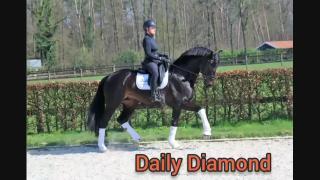 Daily Diamond