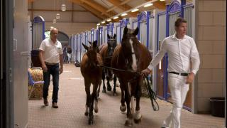 Fokker Gert Stegeman hoopt op Kampioenstitel Gelderse veulens