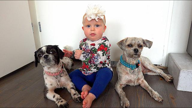 WOEZEL VS PiP  (onze honden) | Bellinga Familie Vloggers #1182 #DeBellingaS #BellingaTV #FamilieVloggers.nl #FamilyVloggers.com #Youtube #Google