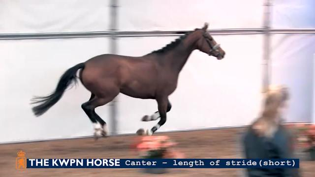 Canter - length of stride