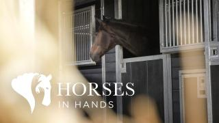 Horses in Hands - It's all about connection