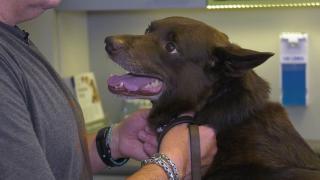 Quality Time op Zondag | 17.4 | Milbemax | Hond Quinlen bij de dierenarts