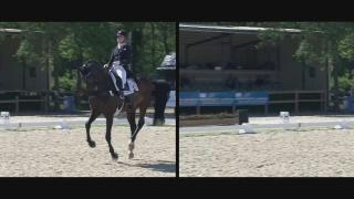 Your Royal Dutch Sport Horse
