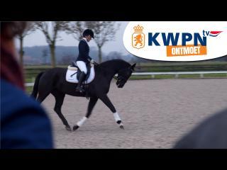 KWPN ontmoet - IBOP