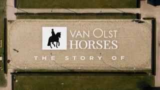 Hengstenshow Van Olst Horses